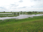 Hollands landschap -